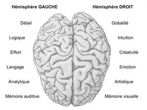 Les deux hémisphères du cerveau