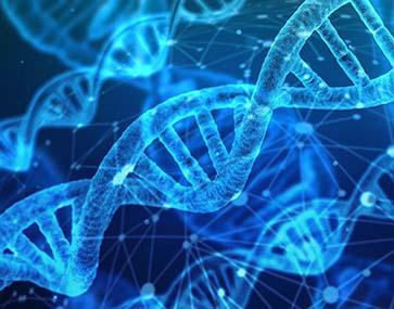 Miniature algorithme genetique